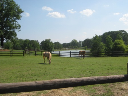 horses-pasture-and-pond