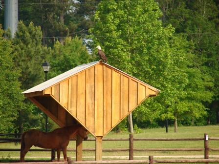 more-eagle-pics-002-small