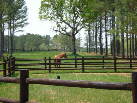 portofino-horse-grsm