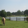 pasture-and-pond