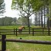portofino-horse-gr