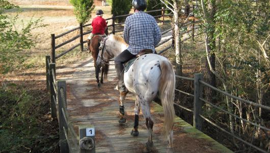 bridge_trail_Shartra1