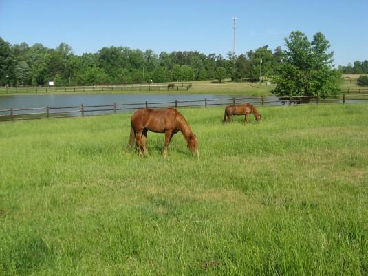 Portofino Equestrian Community