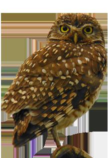 Portofino Luxury Homes - Country Living - Owl